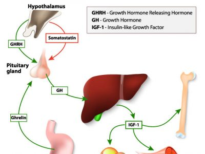 Growth Hormone Deficiencies Can Cause Serious Health Issues