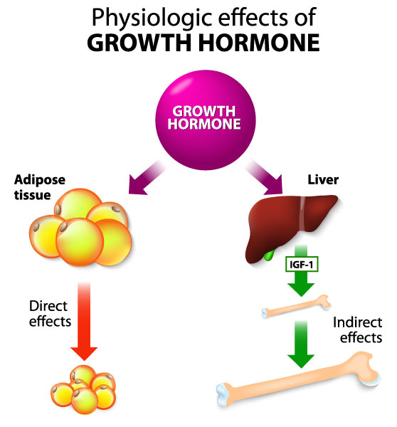 Physiologic Effects of Growth Hormone